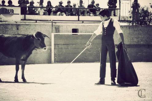 Tienta de vache