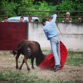 torero_el_rafi_vache_barcelo